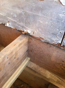 matilda interior renovation beach haven west057